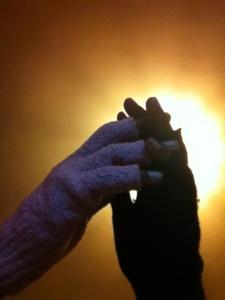 finger-less gloves